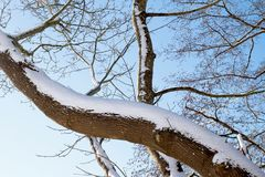 A snow covered tree limb forms a prominent diagonal line in this winter photo. A substantial tree branch is covered in snow and creates a strong diagonal against Stock Photo