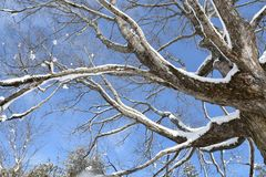 Snow covered tree limbs on a sunny winter day Stock Photos
