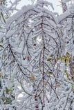 Snow covered tree limbs, winter 2018, Washington, USA stock photography