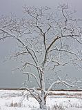 Snow covered tree marsh beach Stock Photography