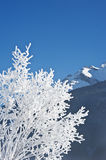 Snow covered tree and mountains Stock Image