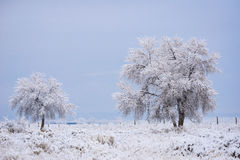 Snow Covered Tree Royalty Free Stock Photo