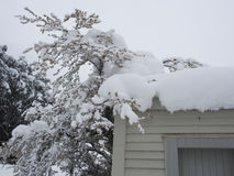 Snow covered tree and roof. A roof covered in now, with tree also covered Stock Photos