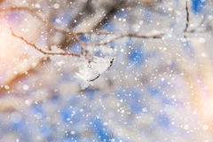 Snow covered tree and snowfall Stock Photography