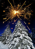 Snow covered tree and sparkler Royalty Free Stock Photo