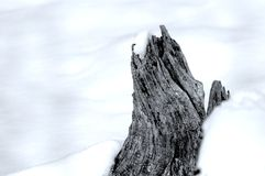 Snow covered tree stump Stock Images