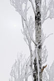 Snow covered tree and sun Stock Photography