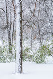 A snow-covered tree trunk. Snowfall in the forest with snow over Stock Image