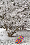 Snow Covered Tree with Umbrella Stock Photography