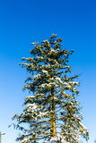 Snow-covered tree Royalty Free Stock Photos