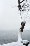Snow-covered tree at West Lake, Hangzhou, China stock photos