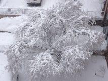 Snow-covered tree Royalty Free Stock Photos
