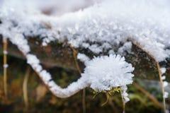 Snow-covered treefilial royaltyfri fotografi