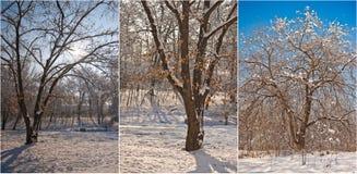 Snow-covered treefilialer Den härliga vintern landskap med snow täckte trees Övervintra i skogen, solen som skiner till och med f Arkivfoton