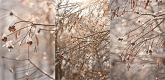 Snow-covered treefilialer Den härliga vintern landskap med snow täckte trees Övervintra i skogen, solen som skiner till och med f Royaltyfri Fotografi