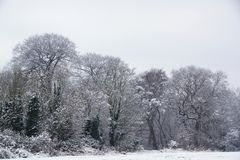 Free Snow Covered Trees Stock Photography - 106781262