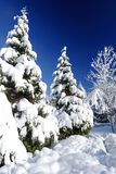 Snow Covered Trees. Shows some trees heavily covered in fresh powder after a snowfall. Image taken with a Nikon D200 Royalty Free Stock Images