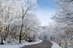 Snow covered trees. Road after snowfall at mountain forest Royalty Free Stock Photos