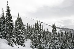Snow covered trees. Royalty Free Stock Images