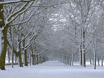 Snow Covered Trees. An avenue of snow covered trees in a public park (Temple Newsam, Leeds Royalty Free Stock Photography