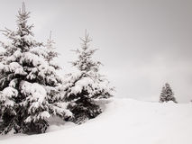 Snow covered trees Royalty Free Stock Image