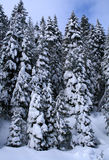 Snow Covered Trees 8 Stock Photo