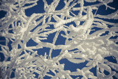 Snow-covered trees against blue sky Royalty Free Stock Images