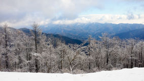 Snow covered trees against distant mountain range & storm clouds Stock Photography