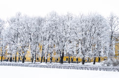 Snow-covered trees in the Alexander Garden Stock Photography