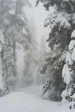Snow covered trees in mist on Cypress Mountain Royalty Free Stock Photos