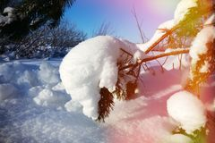 Free Snow-covered Trees And Shrubs In Rainbow Colors Stock Photos - 148892313