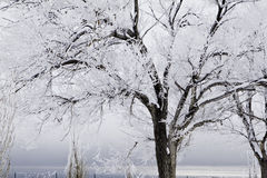 Snow covered trees with approaching storm Royalty Free Stock Photo