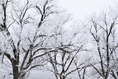 Snow covered trees with approaching storm Royalty Free Stock Photography