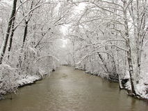 Snow covered trees arching over river. In winter Royalty Free Stock Images