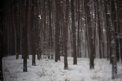 Snow covered trees in beautiful winter forest Royalty Free Stock Images