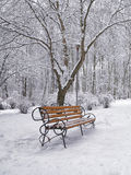 Snow-covered trees and benches in the city park Stock Photo