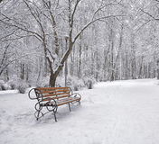 Snow-covered trees and benches in the city park Stock Image