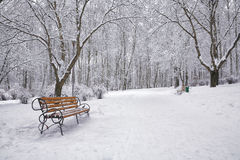 Snow-covered trees and benches in the city park Royalty Free Stock Images