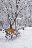 Snow-covered trees and benches in the city park Stock Photos