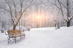 Snow-covered trees and benches in the city park Royalty Free Stock Photos