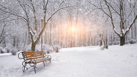 Snow-covered trees and benches in the city park Royalty Free Stock Photo