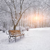 Snow-covered trees and benches in the city park Royalty Free Stock Image