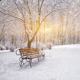Snow-covered trees and benches in the city park Royalty Free Stock Photography