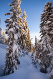 Snow covered trees and blue sky Stock Photo