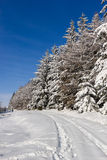 Snow covered trees and a blue sky. Snow covered trees and a small track with a clear blue sky royalty free stock photography
