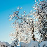 Snow covered trees and blue sky. In the background Stock Image