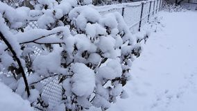 Winter trees and bushes heavily strewn with deep snow. Snow frosty Russian winter. stock photo