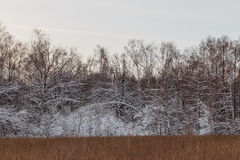 Snow-covered trees and bushes on sunset sky background Stock Photography