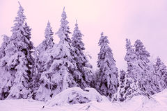 Snow-covered trees in Carpathian Mountains Stock Photo