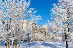 Snow-covered trees in city of Moscow, Russia Royalty Free Stock Images
